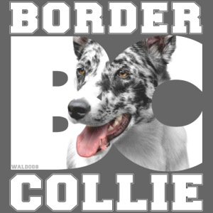 Border BC Collie II