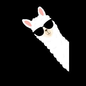Cooles Alpaka mit Sonnenbrille