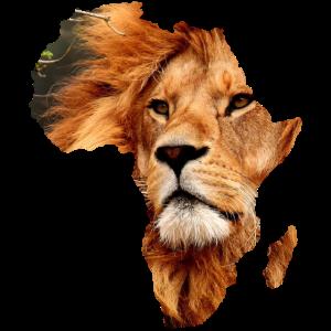 Afrika Löwe