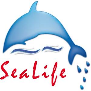 Delfin als glücklicher Meeresbewohner