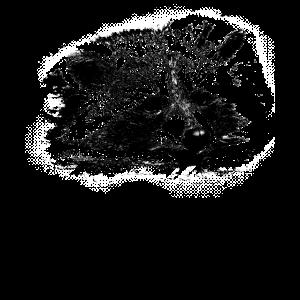 Niedlicher Waschbär