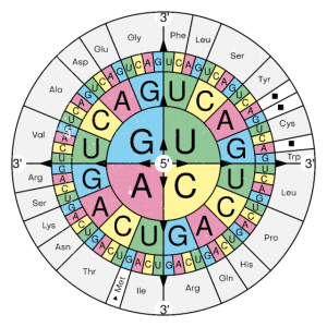 Biochemie RNA Codon Code Sonne Grunge Look