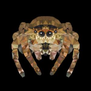 Polygon Spinne Spinnen Insekten