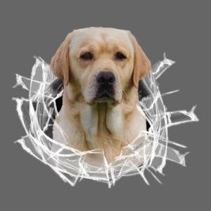 Labrador Gelb im Glasloch