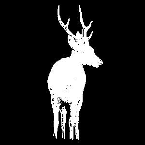 Rehbock / Hirsch Tierportrait (dunkle Produkte)