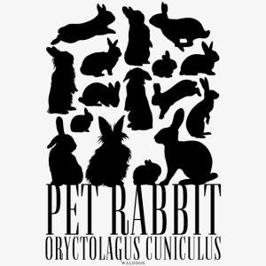 Pet Rabbit Black