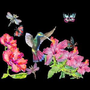 Kolibri, Libellen, Schmetterlinge und Hibiskus
