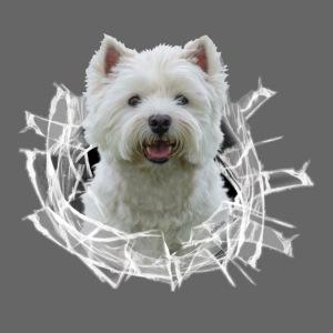 West Highland Terrier im Glasloch