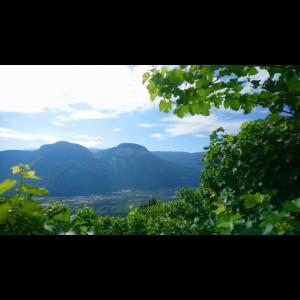 Südtirol Weinberg