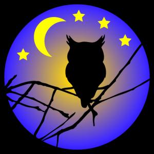 Nachteule / Eule / Mondnacht