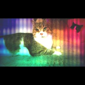 Katzendesign 5