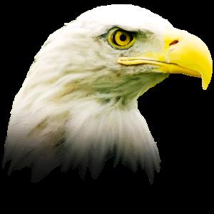 eagle head design