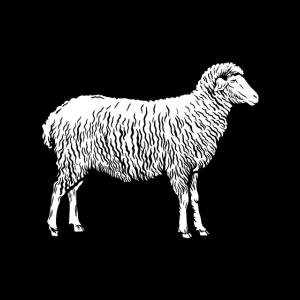 Schaf schönes Schaf Design Schafe