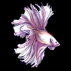 Bettafisch in Wasserfarben exotischer Fisch