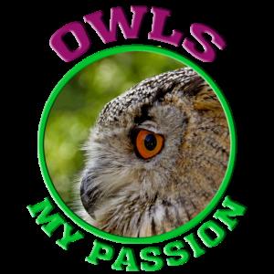 Eule / Owl / Nachteule / Uhu