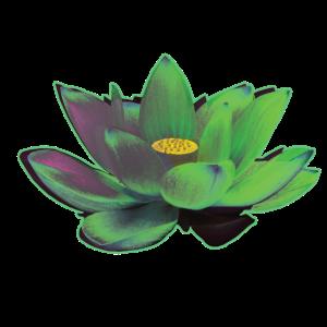 Lotusblüte grün