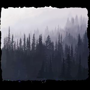 Waldlandschaft in den Bergen