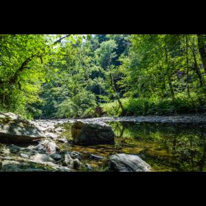 Mystischer Waldfluss