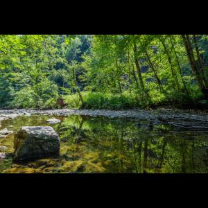 Mystische Waldoase