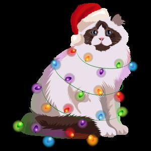 Ragdoll-Katze Lichterkette Weihnachten