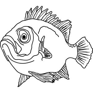 Fische Barsche Ozean Meerwasser Aquarium Angeln