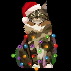 Maine-Coon Katze Lichterkette Weihnachten