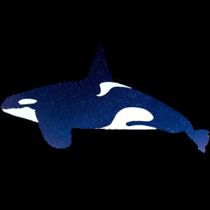 Orca im Nachthimmel