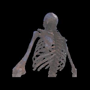 Skelett Oberkoerper