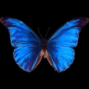 Schmetterling Zeichnung