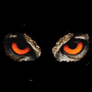 Augen Eule, Eulen, Vögel, Wald, Tiere