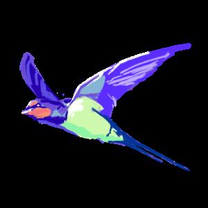 soaring swallow