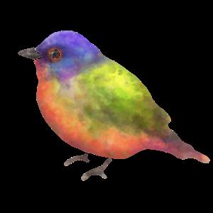 Wunderschöner Vogel
