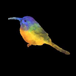 Colibri - Vogel