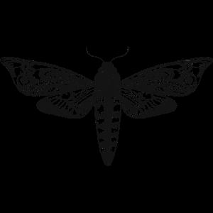 Zeichnung eines Totenkopfschwärmer