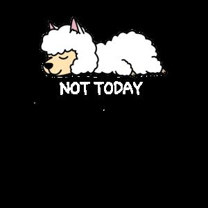 Not Today Faules Lama - Lazy, Faul, Alpaka, Lama