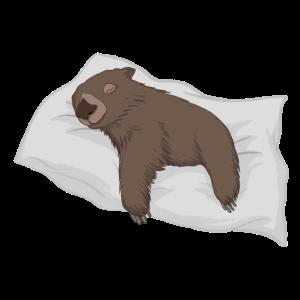 Faulpelz / Schlafender Wombat
