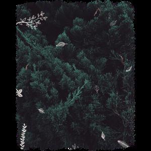 Wald & Blätter