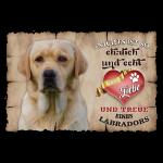Gelber Labrador echte Treue & Liebe