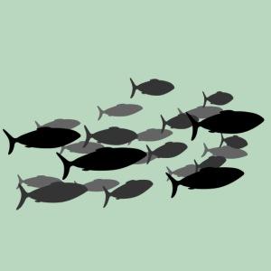 Vis Fish