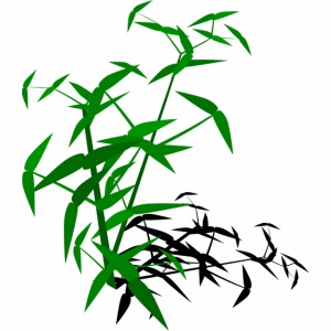 Bamboo with shadow