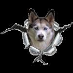 Husky im *Metall-Loch*