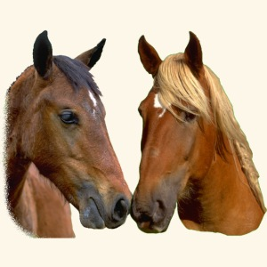 Horses Head Kissing Horses Stallion and Mare head
