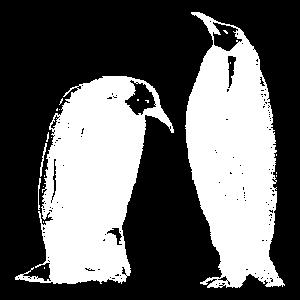 Pinguine Kaiserpinguine schwarz-weiß (dunkle Prod)