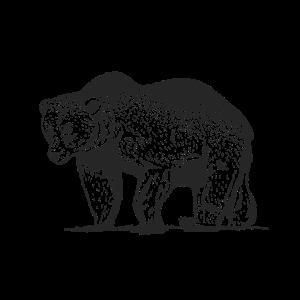 Grizzly Bär in schwarz weiß Zeichung grizzly