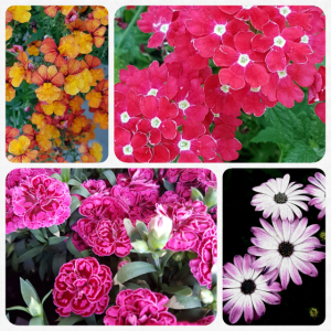 Blumen Collage