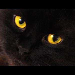 Katzenaugen Gelb