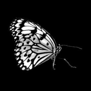Schmetterling, Schmetterlinge, Insekt, Natur
