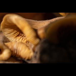 Form der Pilze