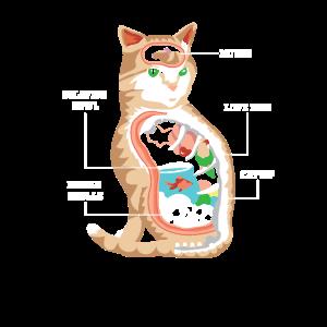 Anatomie Katze Tierarzt