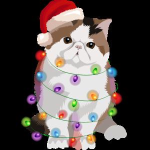 Exotische Kurzhaarkatze Katze Lichterkette Weihnac